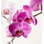 Orchid Terrarium Class