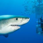 Swimming with Sharks Presented by Bill Henschke